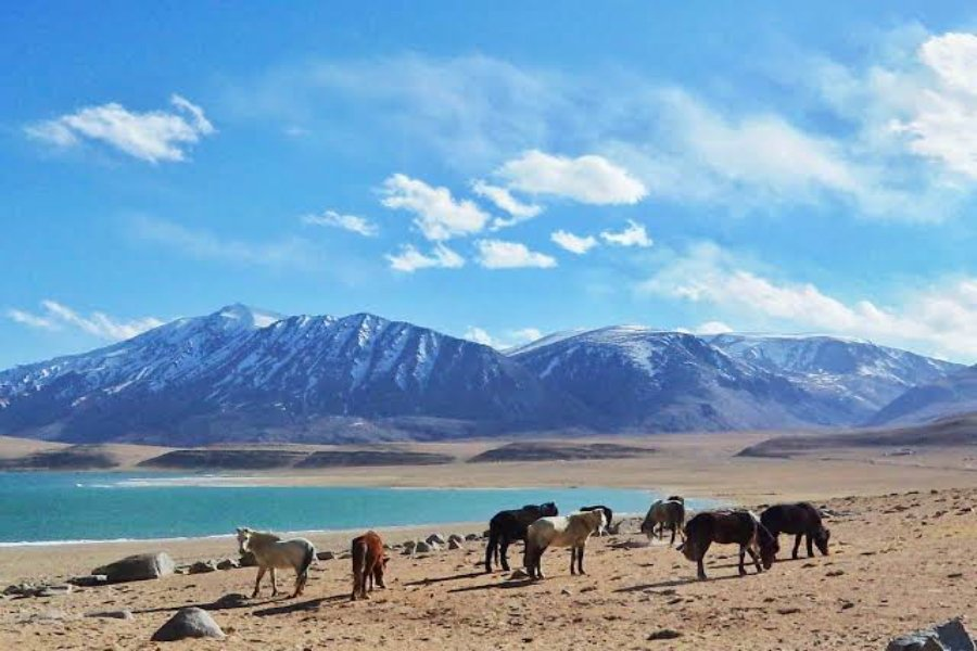 north peace holidays leh offers